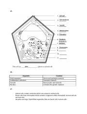 SCIENCE SNC2D-P : Science - Grade 10 Academic - ILC - Course