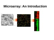 7 microarry