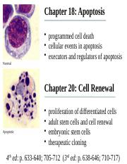 Chapter 18&20 Apoptosis