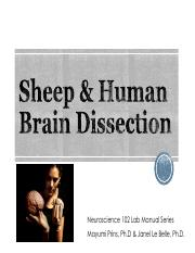 LAB 1 2017 Sheep Brain Dissection Final corrected.pdf