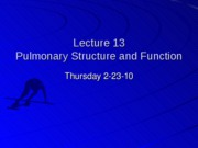 Student%20Lecture%2013%20Pulmonary-Structure%20Function