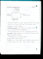 Chapter 6 notes - cellular reproduction