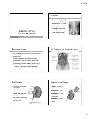 (1) Overview of the Excretory system.pdf