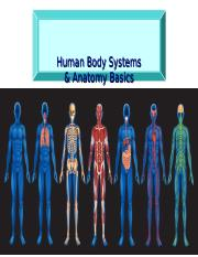 Human Body Systems-3