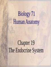 Chapter 19 Endocrine.ppt