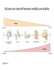 AP150  knee and hip joint.ppt