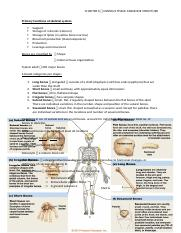 Osseus Tissue and Bone Structure Notes