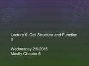Lecture 6 - Cell Structure and Function II