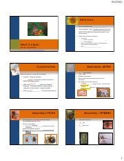 1 What is a Bug and How Bugs Grow.pdf