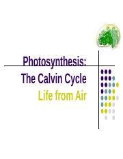 Calvin Cycle.ppt