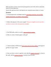 Gel_Electrophoresis_Worksheet - Make sure that you have ...