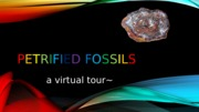 Petrified fossils virtual tour