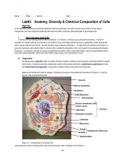 Lab4_Anatomy, chemical composition and diversity of cells_ key.pdf