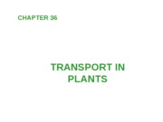 Ch 36 Transport in plants