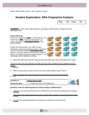 Chapter 7 Dna Fingerprinting Worksheet Answers + My PDF ...