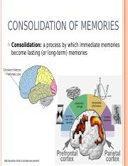 memory.ppt