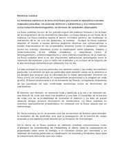 Sobrebid/é Plegado Compacto De 0 A 12 Meses Jan/é Flip Unisex 2 Etapas Ba/ñera Cambiador