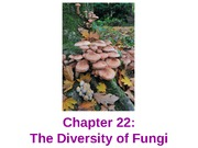 biology chapter 22