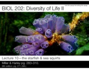 Lecture 10-The echinoderms-2016-Slides.pdf