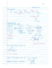 Organic CHEM 11.13 Carbohydrates