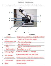 microscope worksheet pp with answers