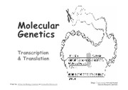 13_Molecular_Genetics_Transcription_Translation