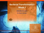 Bacterial Transformation week 2 Lecture