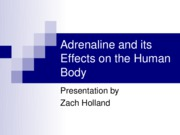 Adrenaline and its Effects on the Human Body