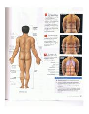 Visual Anatomy and Physiology Ch. 1 pg 25.png