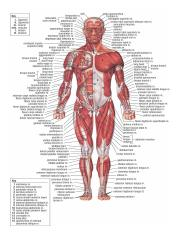 anatomy-of-the-human-body-different-human-body-parts-human-anatomy-and-physiology-pdf.jpg