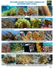 PICTURE GUIDE GLOVERS STONY CORALS 2013