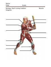 Muscle Diagram.docx