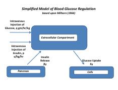 Excerpt_Bolie_Model_Control_Of_Blood_Sug.pdf
