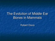 The Evolution of Middle Ear Bones in Mammals (1)