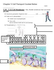 03 Cell Membrane Notes.docx