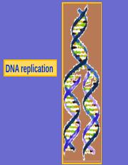 Ch14 DNA replication