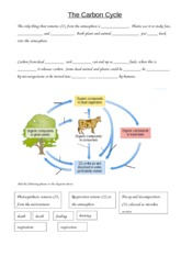 Grade 10 Biology Carbon Cycle