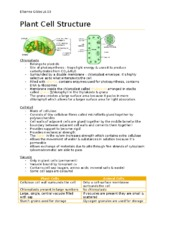 Plant Cell Structure.docx