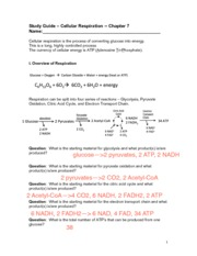07 - study guide - respiration