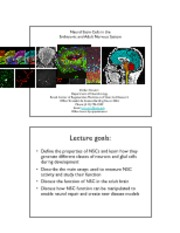 Lecture 13 Neural Stem Cells.pdf