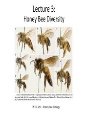 Lecture 3 - Honey Bee Diversity