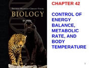 chapt42_lecture Revised