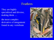 Feathers_2011