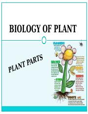 BIOLOGY OF PLANT.ppt
