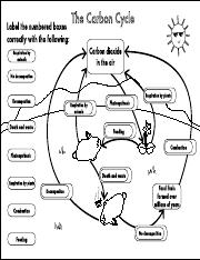 GCSE Carbon Cycle A4 poster to label answers.pdf