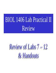 Lab Practical 2 Review