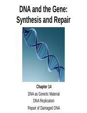 Lecture%2014%20DNA%20Synthesis%20and%20Repair.pptx