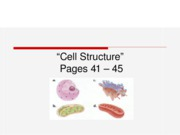 Cell structures lesson2