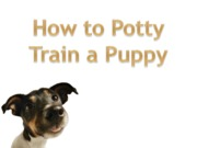 How to Potty Train a Puppy1