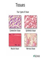 Ch 05 Tissues (1) this one.pptx